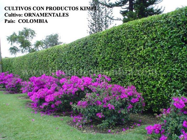 cultivo ornamentales